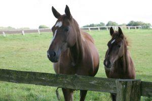 Tierseuchenversicherung und Tierdiebstahlversicherung